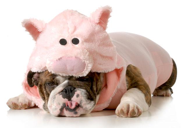 Wir verraten Dir, wie Du Deinen inneren Schweinehund austricksen und sportliche Erfolge feiern kannst.