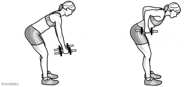Vorgebeugtes Rudern mit Kurzhanteln - Die korrekte Ausführung